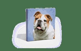A pet portrait print.